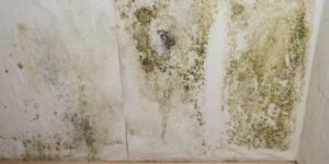 Mold Testing Boise